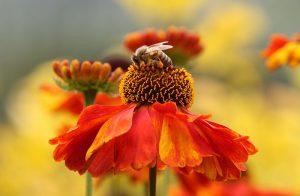 Bier og blomster - Sjelefode